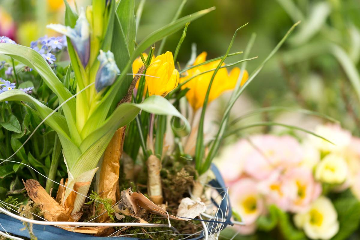 Frühlingskurs - Blumenschmuck für den Frühling und Ostern Outdoor