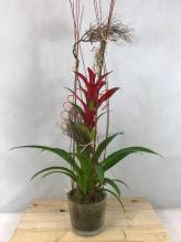Pflanzen Arrangement
