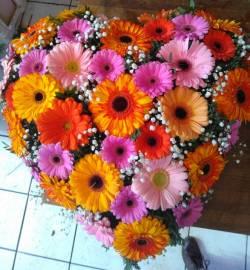 Geschenke & Anlässe Blumen