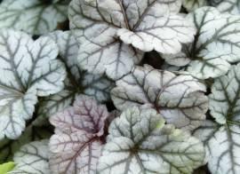 Grünpflanzen, Büsche & Sträucher Blumen Eber / Volmary