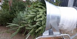 Weihnachten Nordmanntanne