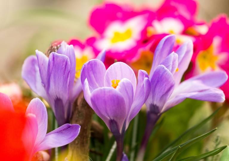 Blumen Eber Gundelfingen Birkenried