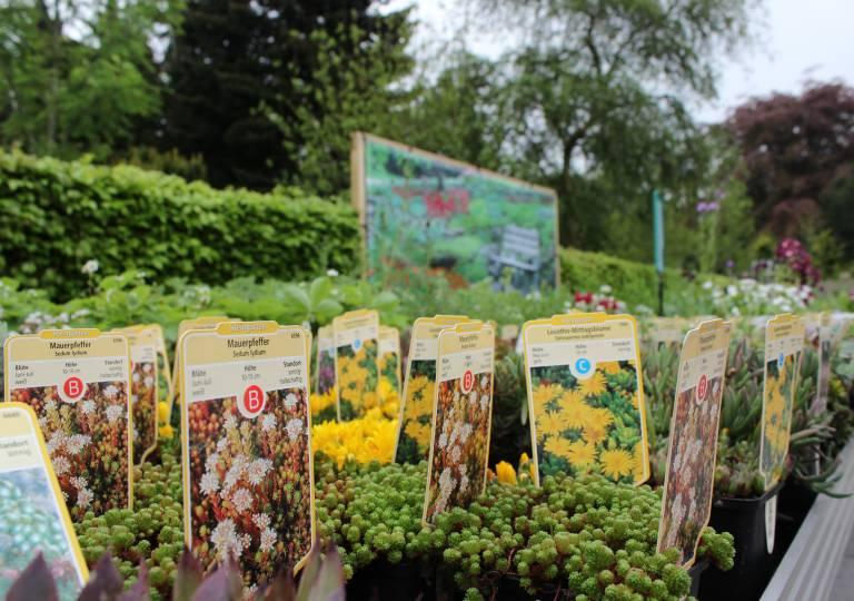 Blumen Carstensen Leck