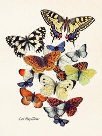 Poster & Bildende Kunst Sköna Ting