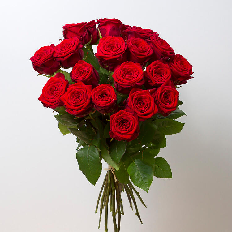 Rote Rosen Kostenlos Ansehen