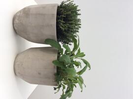 Grünpflanzen, Büsche & Sträucher