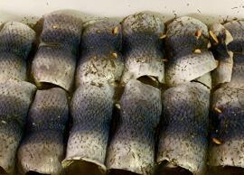Fisch & Meeresfrüchte Fisch & Meeresfrüchte Fisch