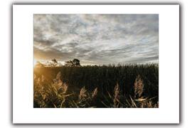 Fotografie Druck & Print