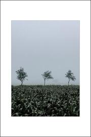 Fotografie Druck & Print Posterprints / HEIMATLIEBE