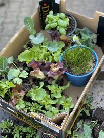 Pflanzen- & Kräuteranbausets Blumen Böswirth
