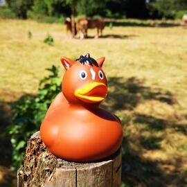 Tierische Ente lilalu Aachen