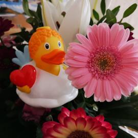 Enten zum Verlieben lilalu Aachen
