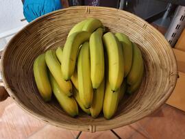 Obst & Gemüse Fairtrade BanaFair