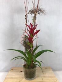 Pflanzen by BlumenCompany