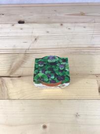 Garten & Balkon Greengifts