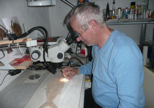 Fossilienpräparator Solnhofen