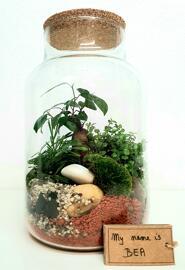 Plantes Atelier créatif Petra