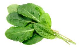 Frisches & Tiefgefrorenes Gemüse Kräuter & Gewürze Letzebuerger Geméis