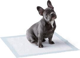 Outils et systèmes de traitement des déjections d'animaux de compagnie Wizamart Basics