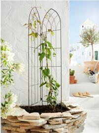 Pflanzen Blumenkäfige & Zubehör