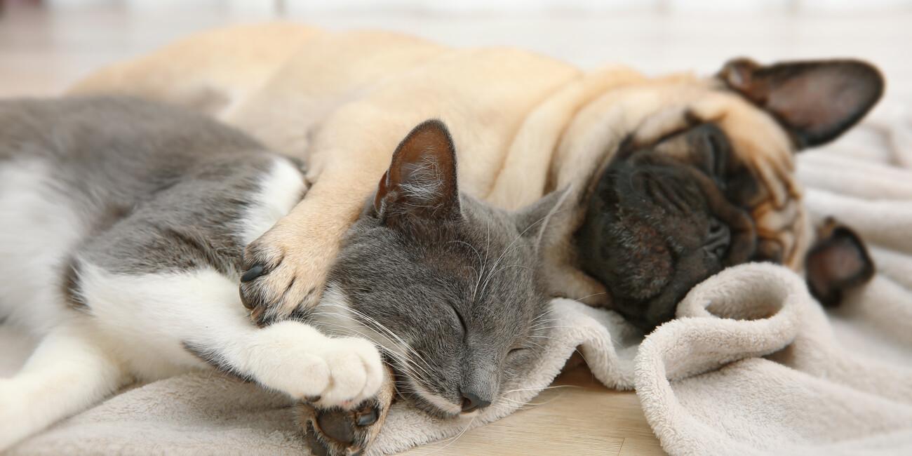 Was Ihr Haustier begehrt