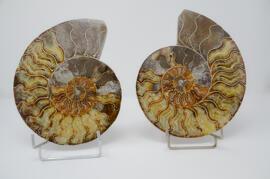 Steine & Fossilien Terrapractica