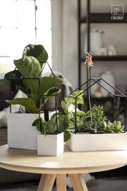 Plantes Raeder