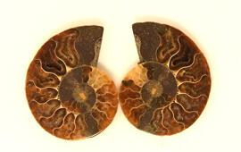 Rohsteine & Mineralien Steine & Fossilien Ammonit