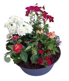 Blumen Coupe ronde - petite taille