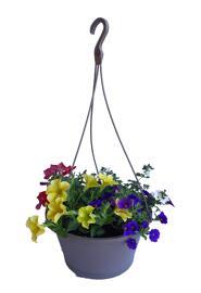Blumen Suspension