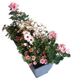 Fleurs Jardinière en plastique