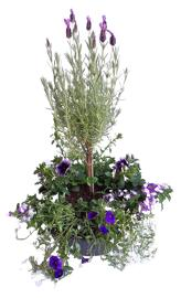 Blumen Coupe ronde - grande taille