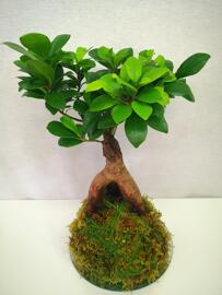 Grünpflanzen, Büsche & Sträucher Atelier créatif Petra