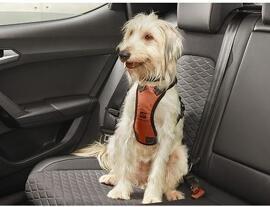 Colliers et harnais pour animaux de compagnie Pièces détachées pour véhicules Seat Original Zubehör