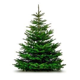 Festtags-Dekoartikel Weihnachtsbaum - Sapin de Noël 150/200