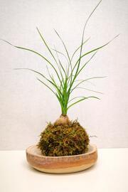 Pflanzen Atelier créatif Petra