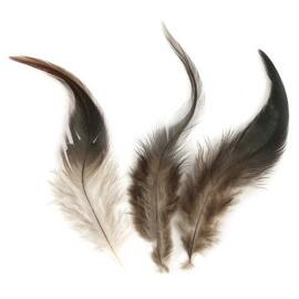 Plumes RAYHER