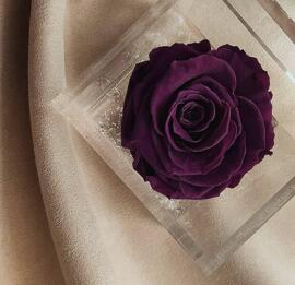 Blumen Flowercube