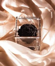 Fleurs Flowercube