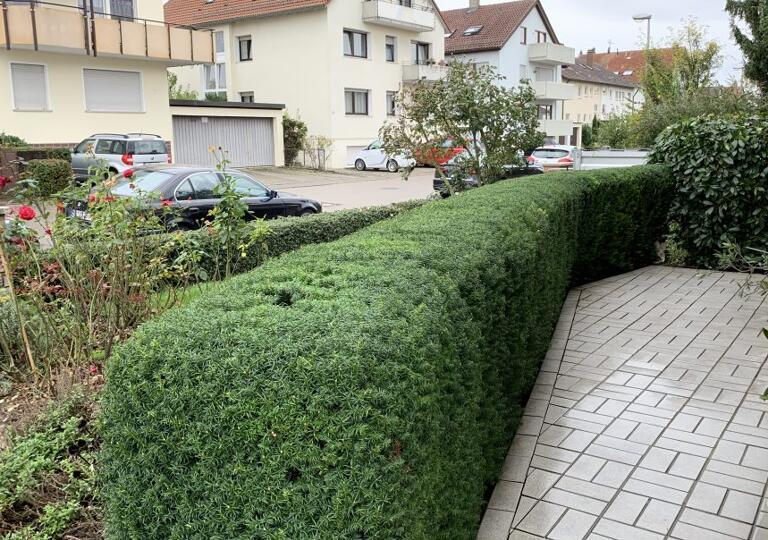 DS Dienstleistungen Garten und Landschaftspflege Korb
